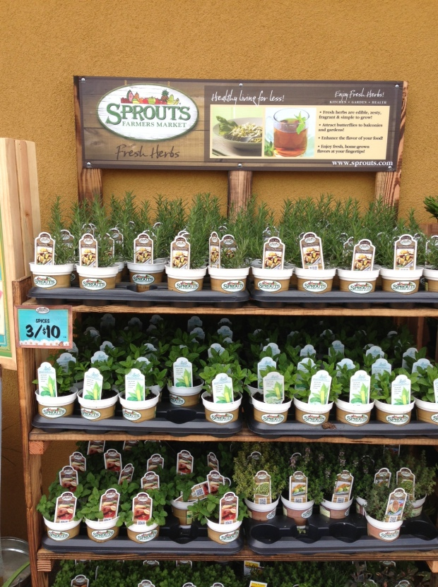sprouts herbs